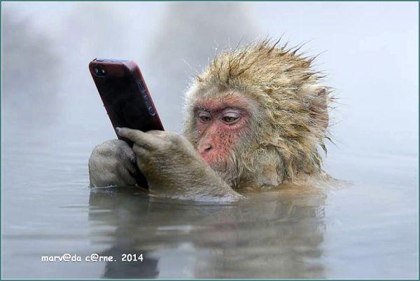 celular Photograph by Marsel van Oosten